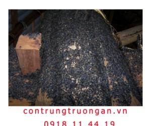 Thuốc diệt bọ đậu đen